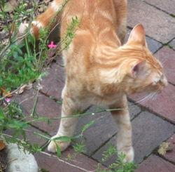 Feralcat1