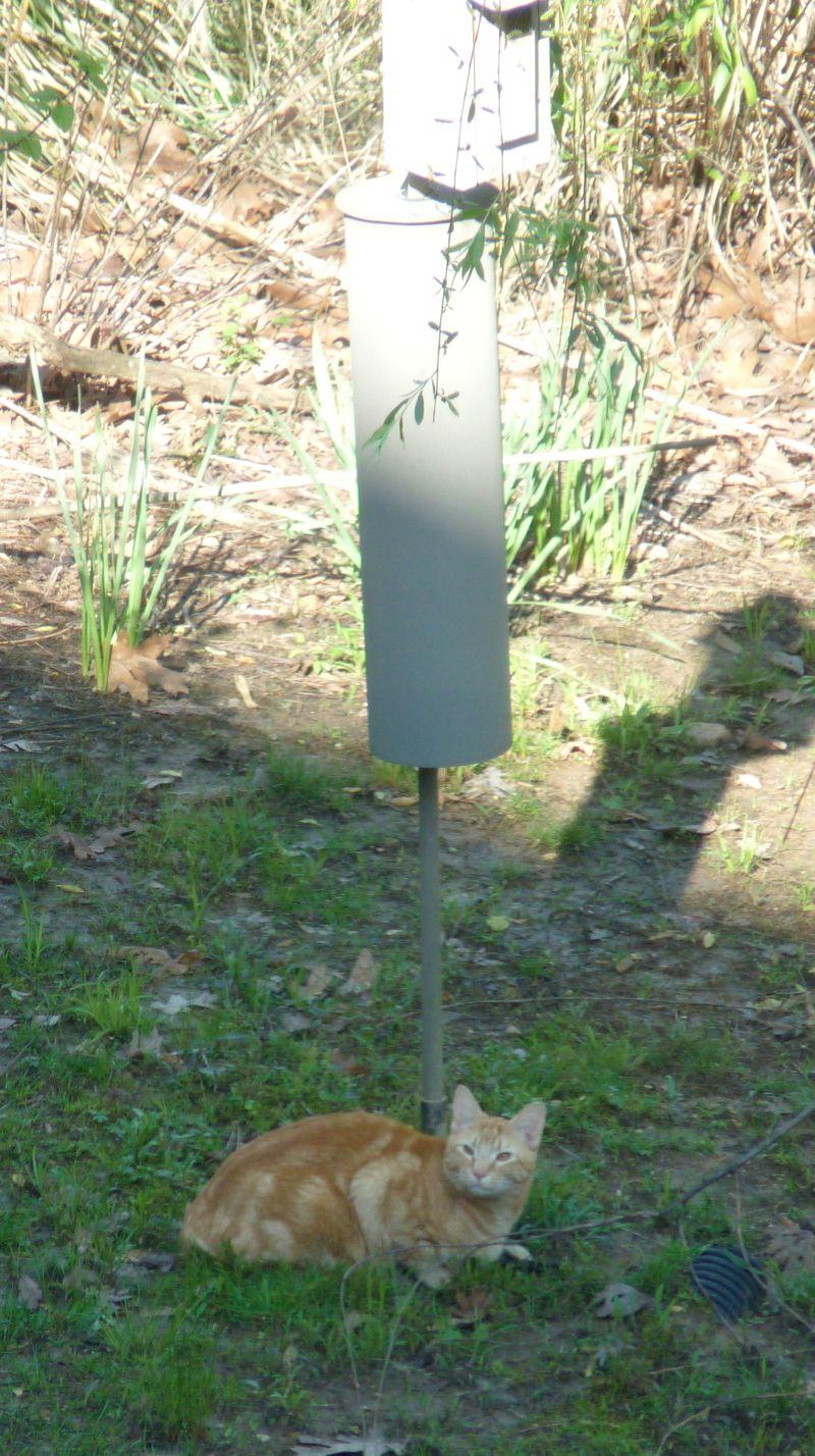 Cat at birdhouse2