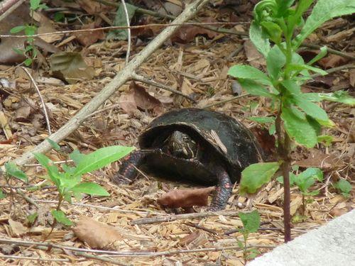Turtleonnest