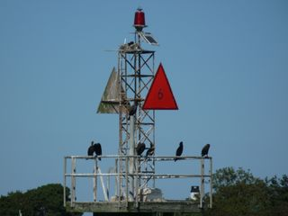 Cormorants on channel marker