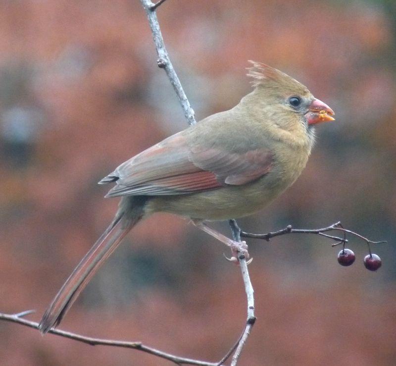 Cardinal side