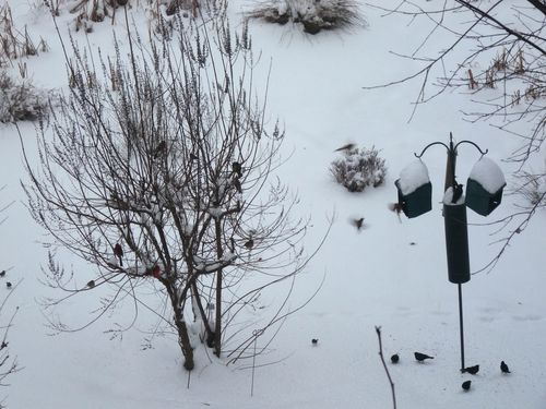 Birdfeeders in snow