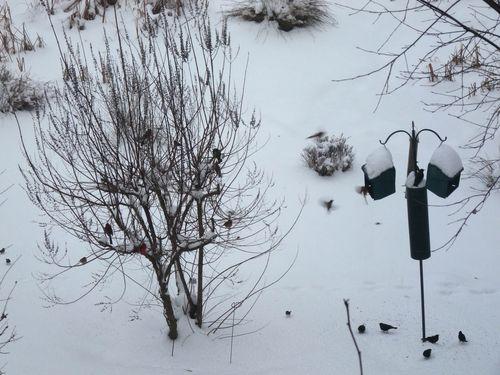 Birdfeeders in snow