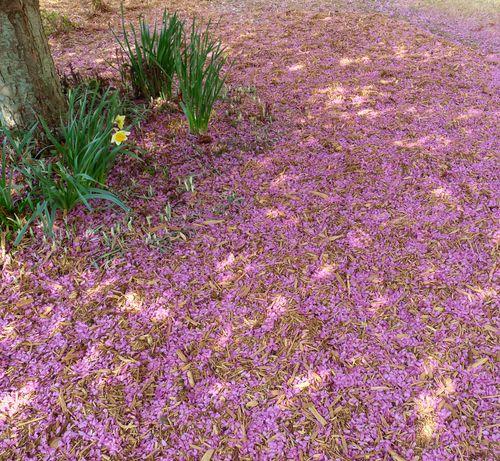 Crabapple petals