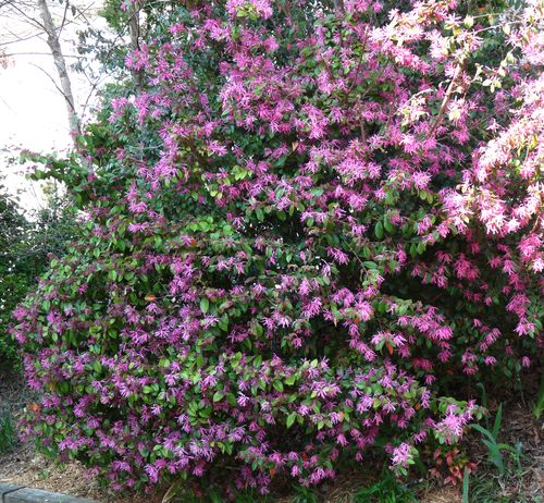 georgia backyard nature flowering shrubs