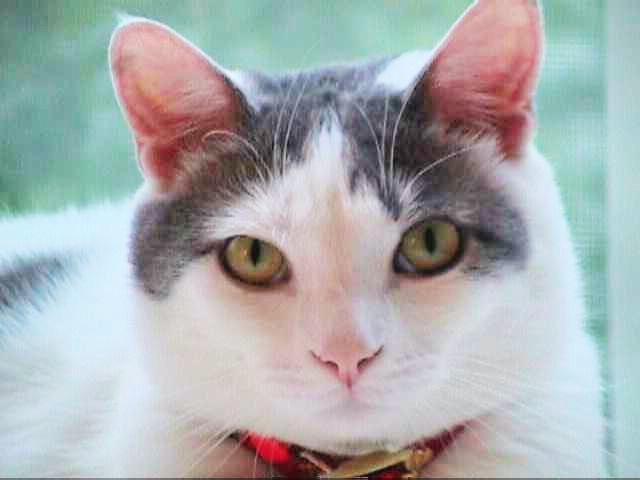 Nicholas the cat 1