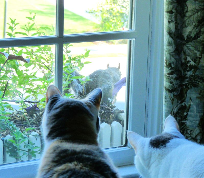 Cats and squirrel (2)