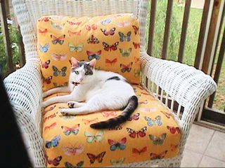 Nicholas the cat on porch