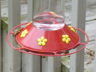 Bees on hummer feeder