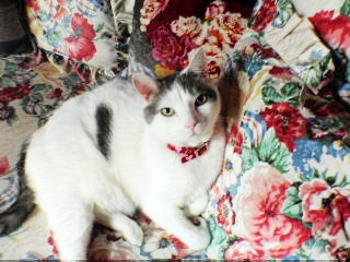 Sweet nicholas the cat