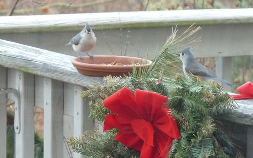 Titmouse christmas