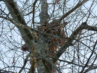 Squirrel nest 3
