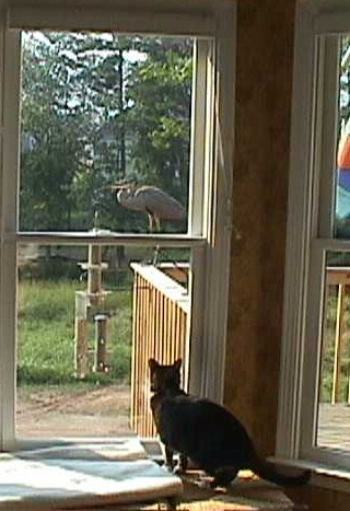 Cat and heron