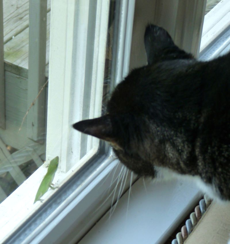 Bea and anole