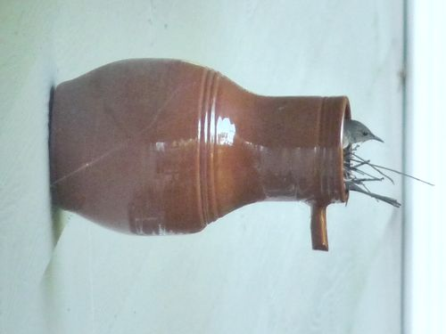Wren in bottle