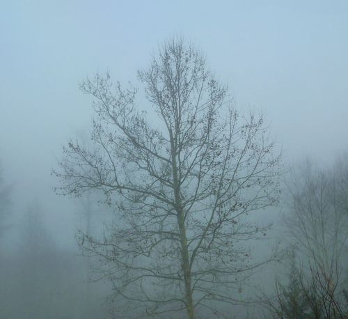 Tree in fog 2