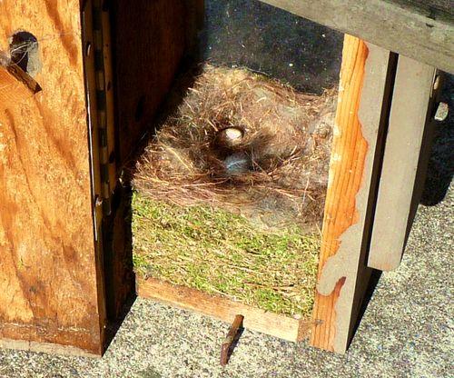 Spring bird nest 2