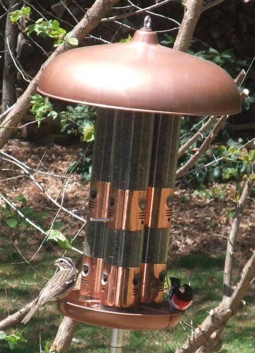 Rose-breasted grobeak