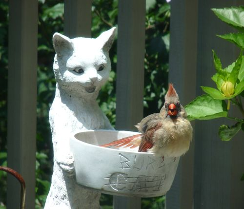 Cardinal in bird feeder