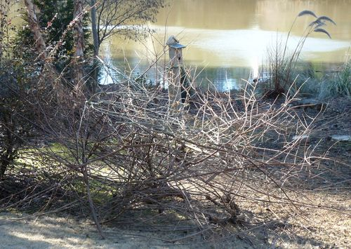 Pruned branches