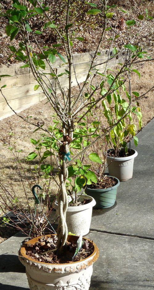 Plants sunning