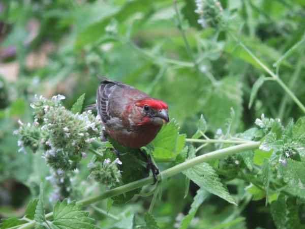 georgia backyard nature feasting finches